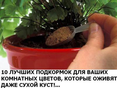 10-podkormok-dlea-tvetov-foto-400x300-4875814