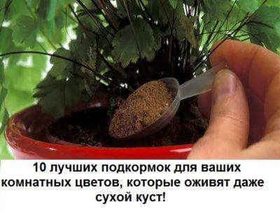10-tvetov-400x301-8482640