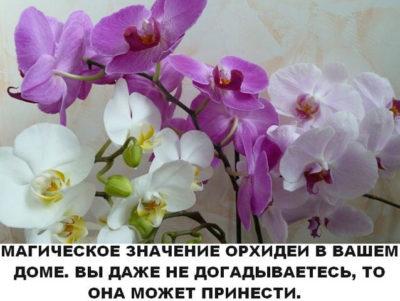 orhidm-400x301-9641411