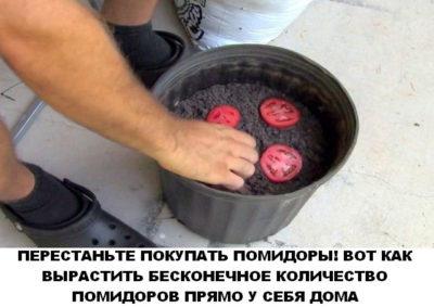perestanite-pokupati-pomidori-foto111-400x283-8880555