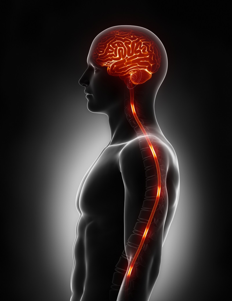 spinal-cord-nerve-energy-impulses-into-brain